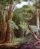 New Zealand Forest (Bush) Vegetation, link to John Gully prints