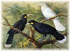 Link to New Zealand Birds' Web Site